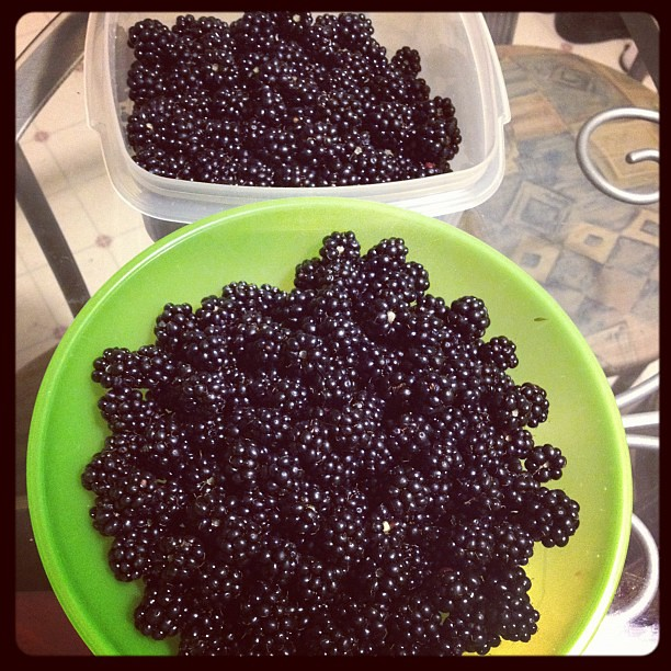 blackberry haul!