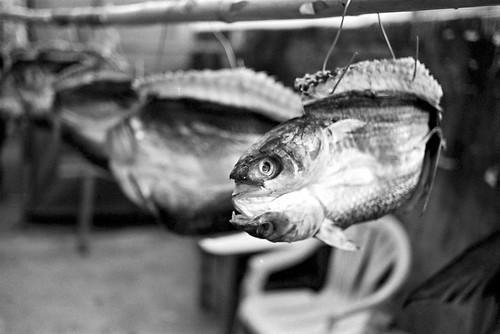 為保存而製作的魚乾