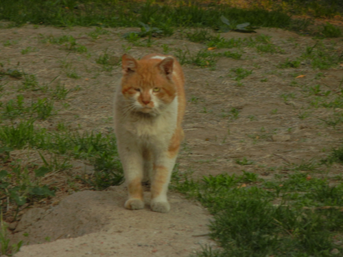 Cats in Shenyang, China _ 9946