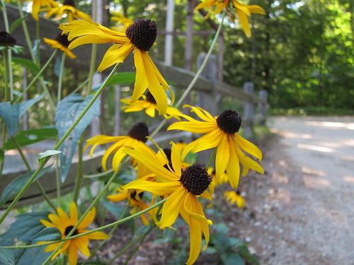 path flowers