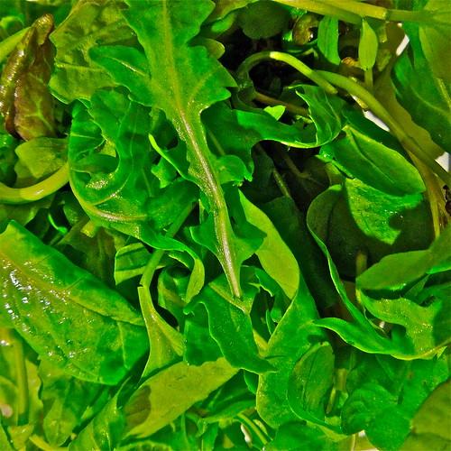 Salad Greens by Irene.B.