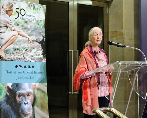 Jane Goodall at the Royal Ontario Museum