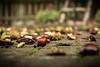 Der Herbst ist da by Afolo.de