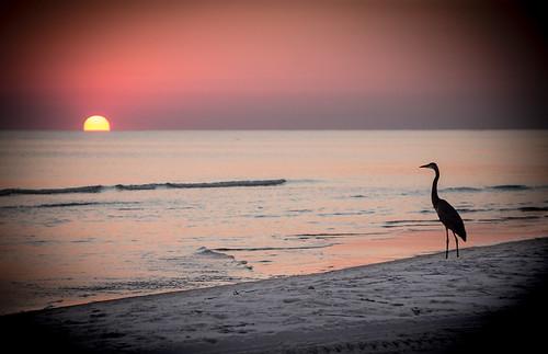 sunset seascape heron nature landscape evening florida beaches silouhette floridabeaches