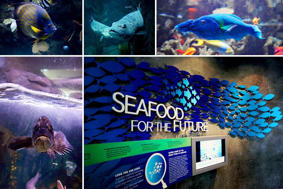 093012_aquarium06
