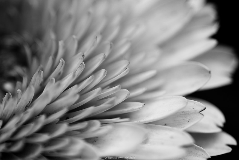 Black and white macro flowers
