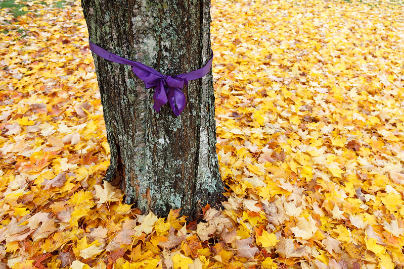 A Purple Ribbon for Domestic Violence Awareness Month