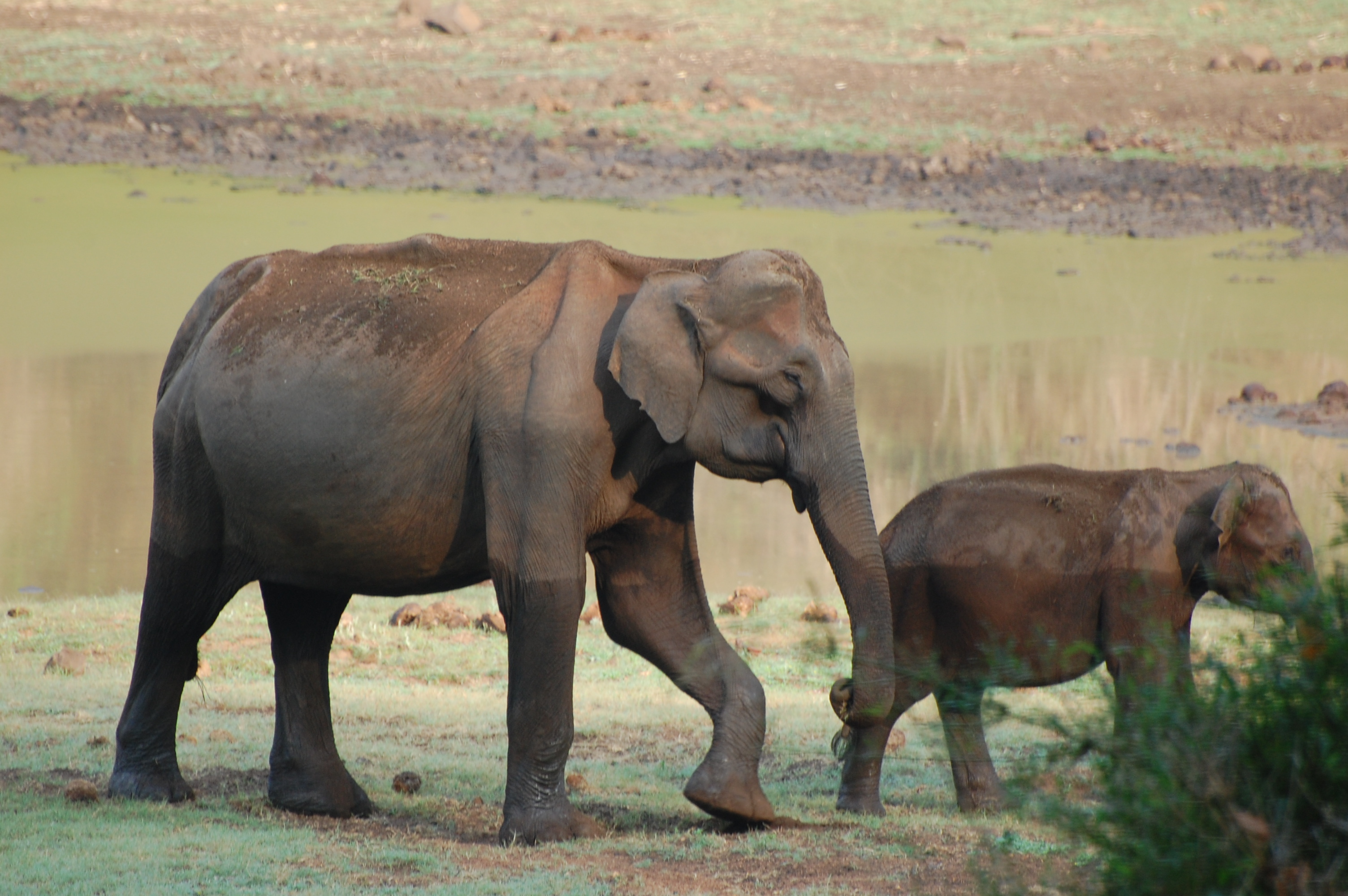 debates on elephant culling Science and uncertainty in south africa's elephant culling debate 111 international movement concerned with the welfare of wild animals grew up, the.