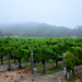 Foggy in Napa