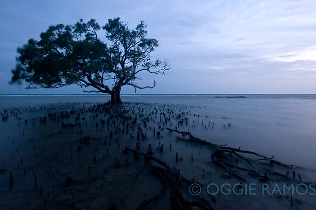Guimaras Costa Aguada Twilight Mangrove