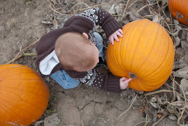 pumpkinpatch-5
