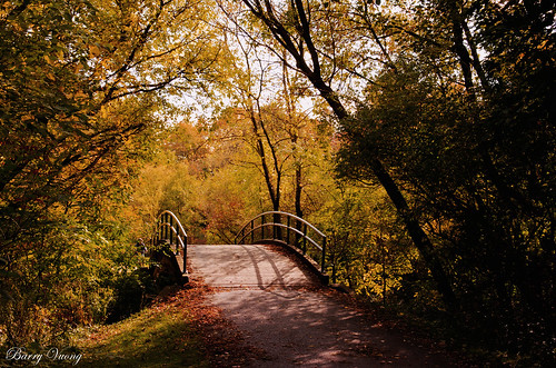 autumn grosspark thornhill ontario canada toronto