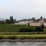 Domänenweingut, Schloss Schönborn