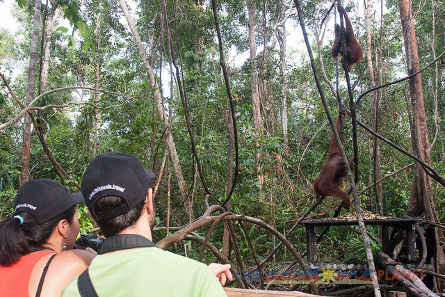 Orangutan World, Tanjung Puting Borneo Adventure-95.jpg