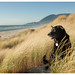 9/12 Carmen: Oregon Coast by Bordadorhund