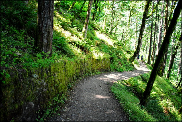Trail from Horsetail Falls to Ponytail Falls - Columbia River Gorge