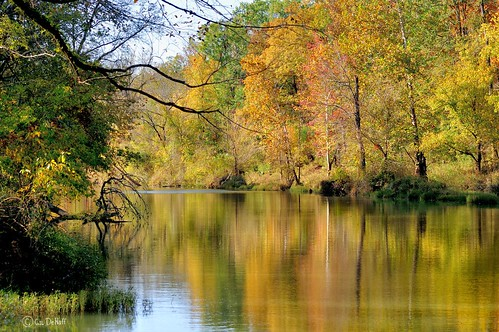 fall creek stream fallcolors fallfoliage foliage streams creeks tibbeecreek mygearandme