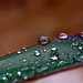 Small photo of Pearls of Monsoon