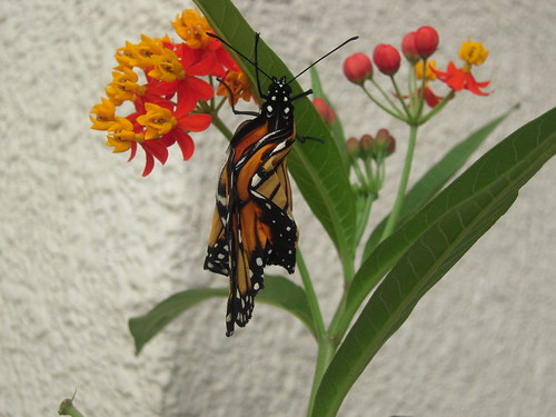 20120908 15 mariposa