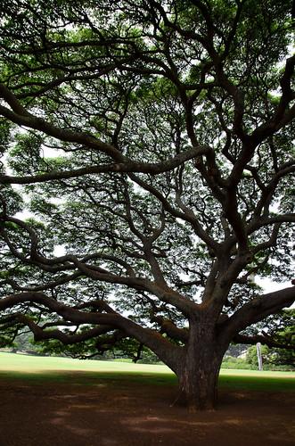 Moanalua Gardens