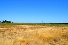 Fields Behind Camp