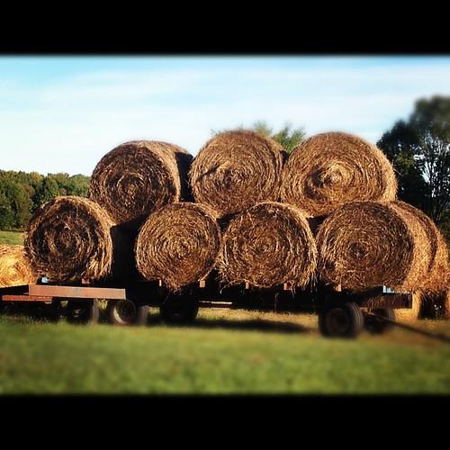 Farm Living - Hay Bales