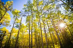 [フリー画像素材] 自然風景, 森林, 樹木, レンズフレア ID:201209201800