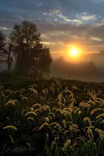 sky sun tree grass fog clouds sunrise
