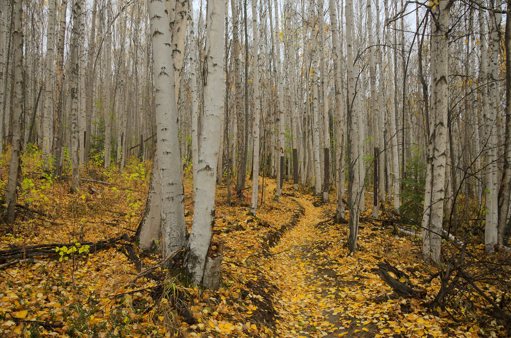 equinox trail