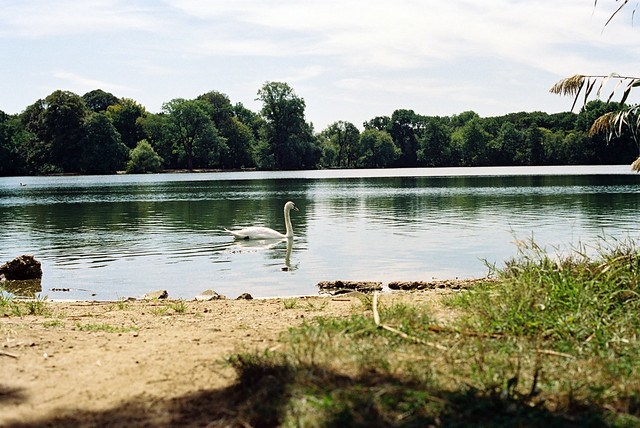 Prospect Park Summer