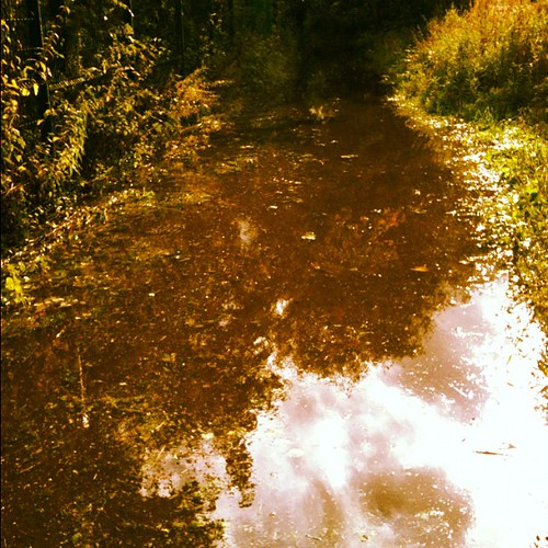 Flooded path