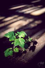 Growing Anyway