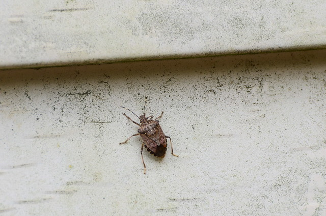 Bug on the Side of our House