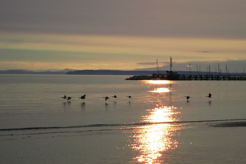 ocean sunset canada reflection beach whiterock migration canadageese