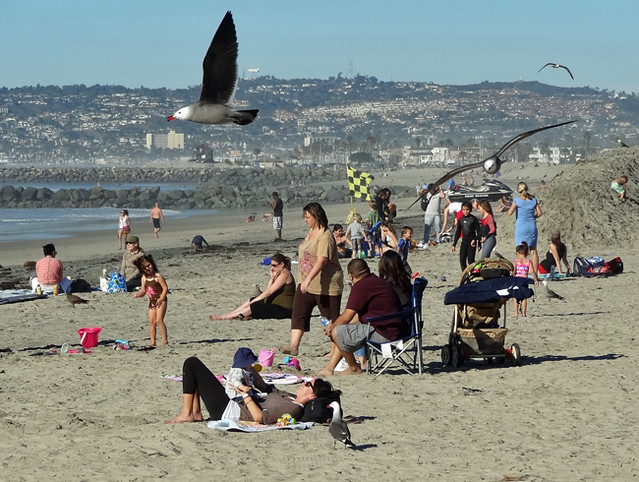 ocean beach-people-birds