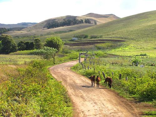 Caballos en el camino