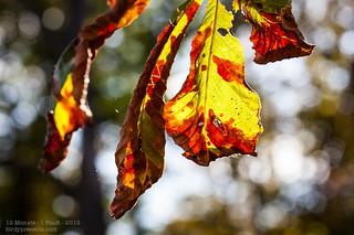 09/2012 Herbst