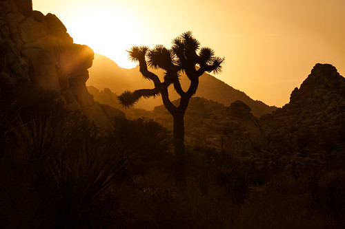 The King Of Ai (Hidden Valley Sunset), Joshua Tree by flatworldsedge