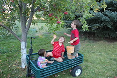 Three kids in a wagon 12