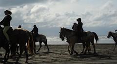Riding horses on the beach, Pacific Ocean, Ocean Shores, Washington, USA