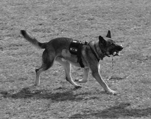 Otto the Police Dog demo