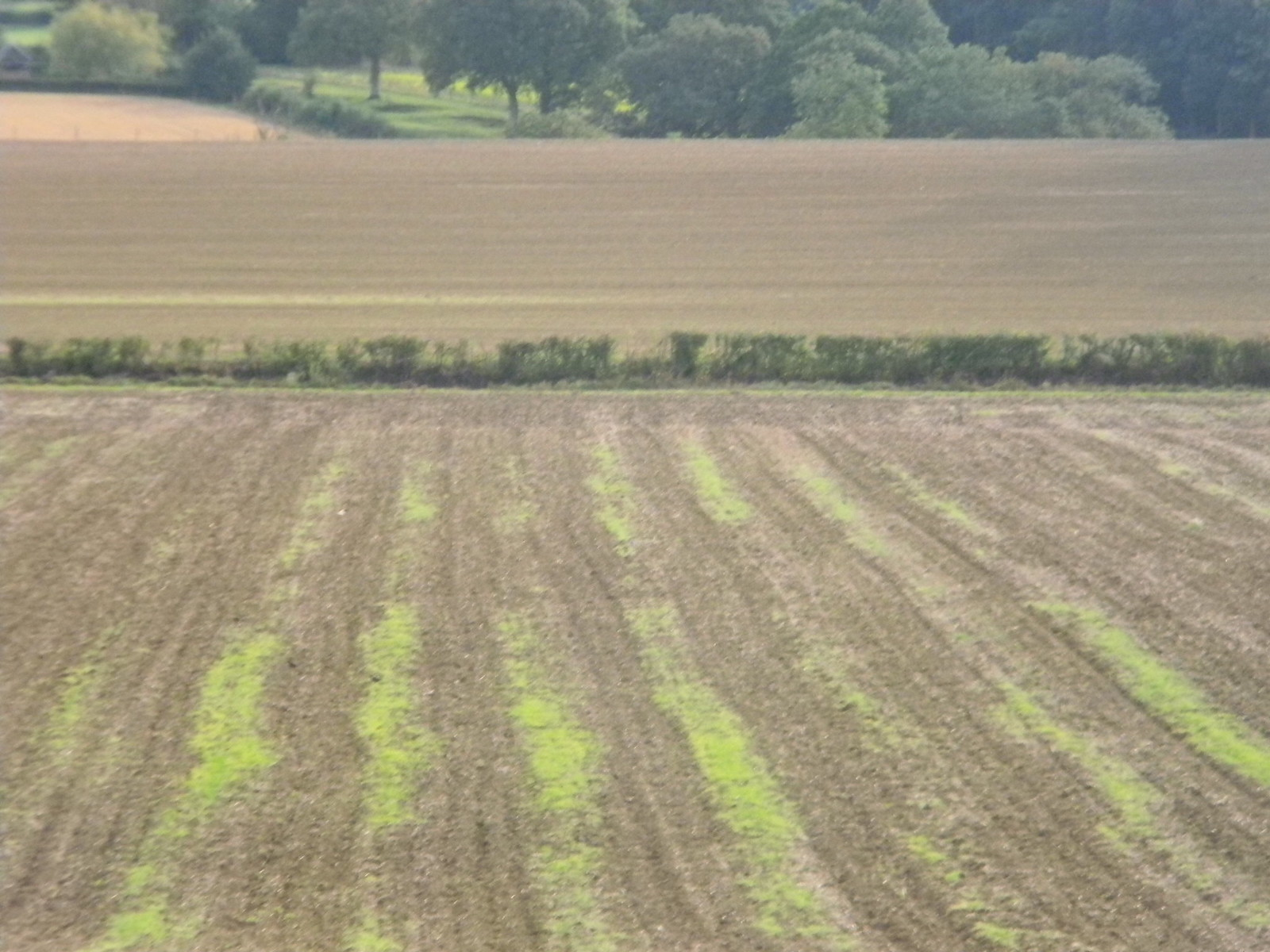 Striped field Balcombe Circular