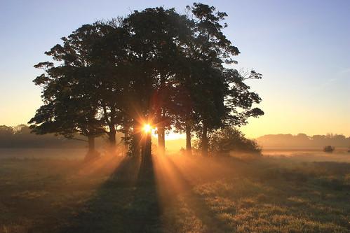 misty sunrise sunrays croxtethpark liverpoolpost