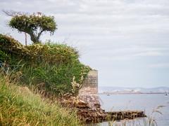 Dorset Tree