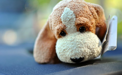 Stuffed dog on a dashboard