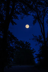 Blue Moon_8589.jpg by Mully410 * Images