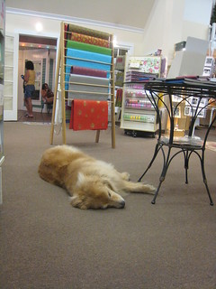 every stationery store should have a sleepy doggie