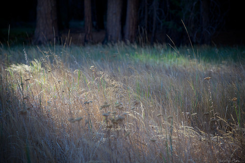 Meadow Detail, Cook's Meadow, Yosemite Valley