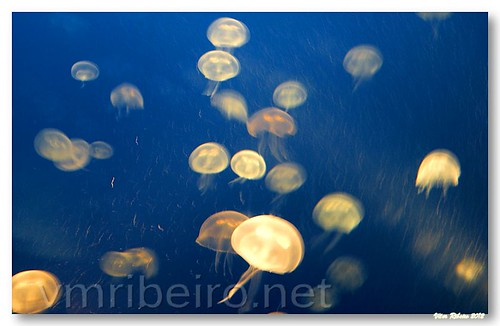 Anemonas by VRfoto