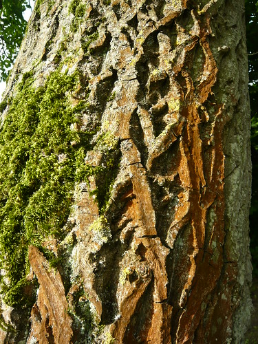Thorp Perrow bark